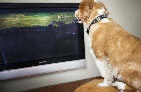 Câinii din România vor avea propriul canal TV!