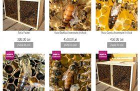 Apis Donau îi ajută pe tinerii apicultori să se inițieze